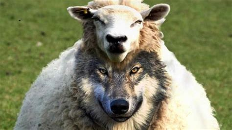 he was a wolf in sheep s clothing 2 volume 2 books christian prophet god will murder s enemies just
