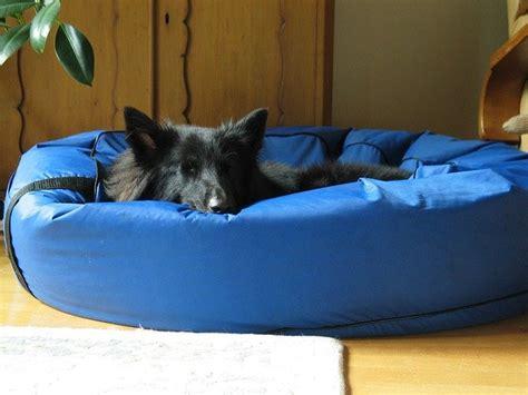 cucce da interno cucce per cani da interno rigide o morbide dogalize