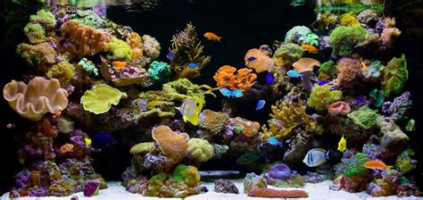 types of aquarium basic 5 saltwater types of fish tanks saltwater aquariums