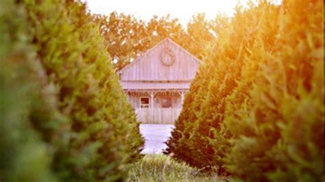 country cove christmas tree farm tennessee christmas