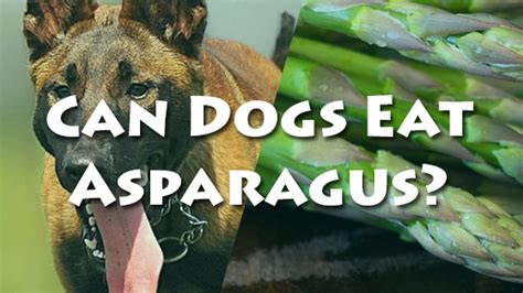 is asparagus for dogs can dogs eat asparagus pet consider