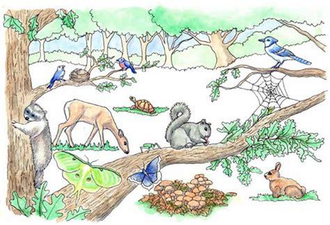 gardening  wildlife landscape  life