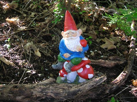 garden gnomes garden gnome the home tome
