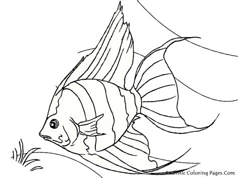 free coloring pages tropical fish tropical fish coloring pages realistic coloring pages