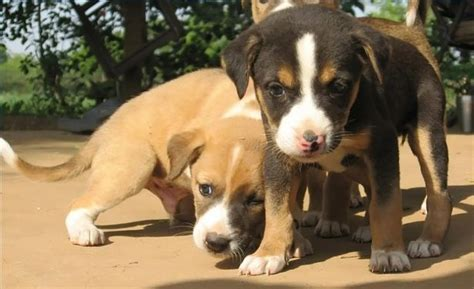 caring for a puppy how to care for puppies tips for any breed kanineklub