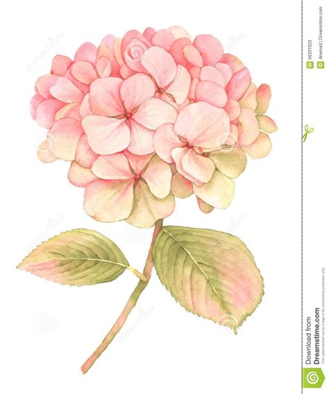 watercolors of hydrangeas google search tattoos