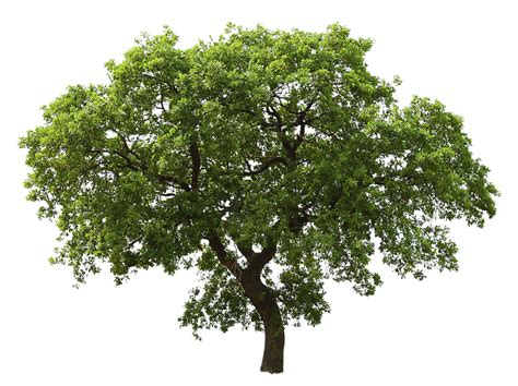 tree images free 20 tree png images free cutouts for architecture