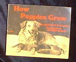 golden retriever puppy teeth falling out deco s ephemera labrador retrievers golden retrievers and other retrievers