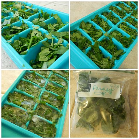 two easy methods for preserving herbs freezing and drying