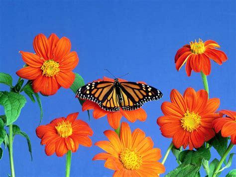 imagenes bonitas de paisajes con flores paisajes de ensue 241 o paisajes de flores naturaleza