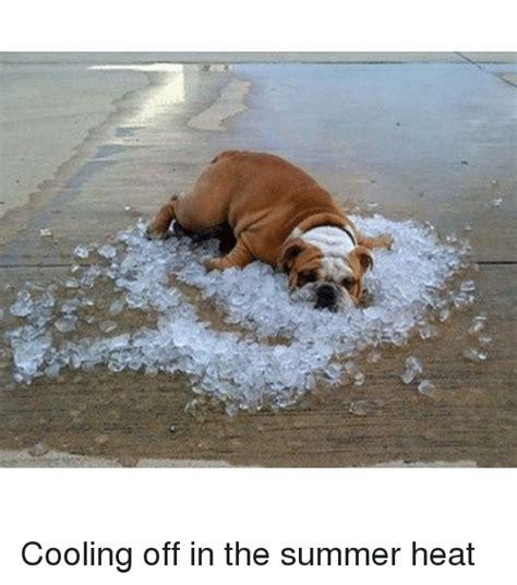 Summer Heat Meme - funny pictures summer heat impremedia net