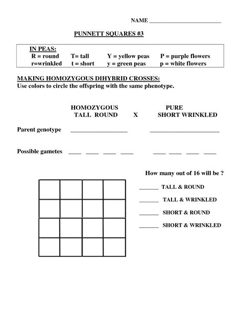 Dihybrid Cross Worksheet by 15 Best Images Of Dihybrid Cross Worksheet Answers