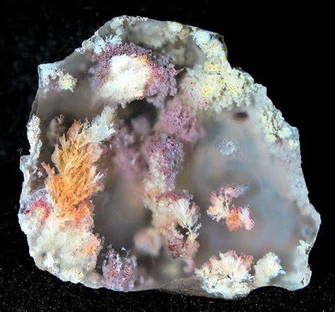 Batu Telur Pertified Wood Es 38 418 best agate images on