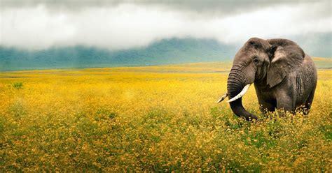 elefantes fondos de pantalla hd wallpapers hd