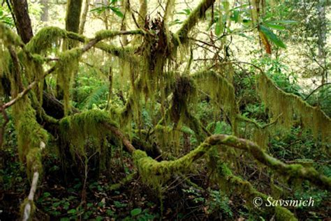 old moss lady savsmich travel diary redwood national park