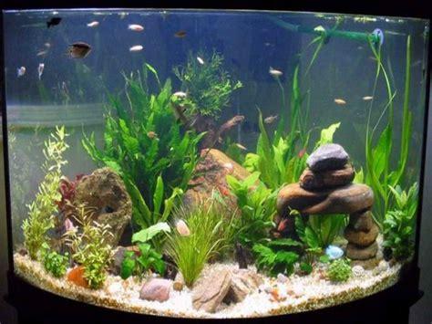 design your aquarium online how to decorate your boring fish tank fish tank