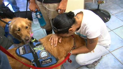canine comfort comfort dogs provide hope after tragedy in orlando video