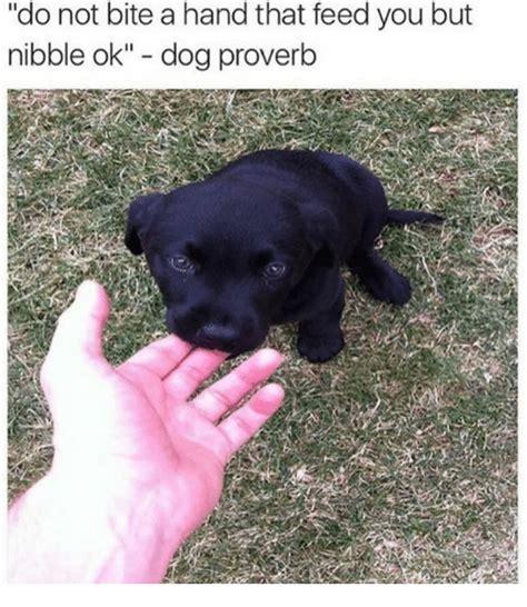 Dog Bite Meme - 25 best memes about proverbs proverbs memes