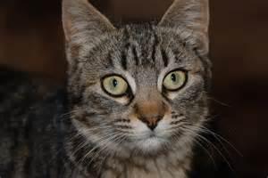 Gato Las lecciones del gato que nos enseña a diario Gato