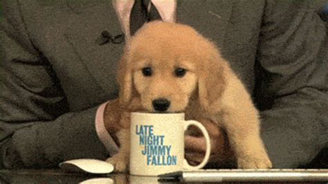 my puppy wont eat but will drink water clich 233 new year s resolutions as told by puppies