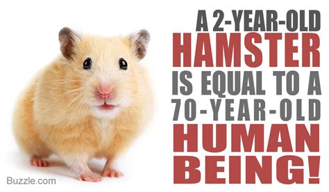 types hamster atol protected the surprising answer to what is the lifespan of hamsters