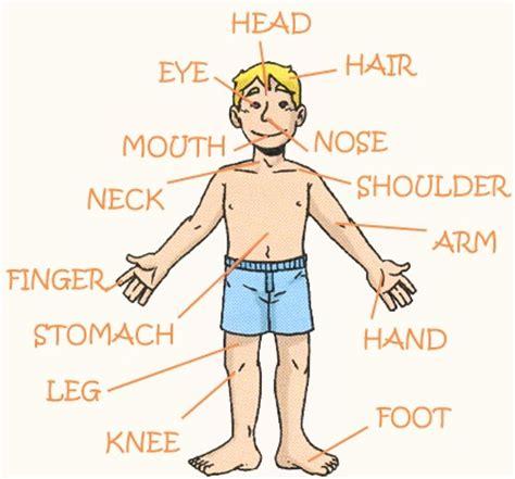 imagenes en ingles de las partes del cuerpo im 225 genes de partes del cuerpo en ingles y espa 241 ol