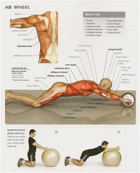 ab wheel physiology and substitute excersize excellent diagram of the multitude of muscles
