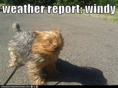 Wind Meme - windy memes image memes at relatably com