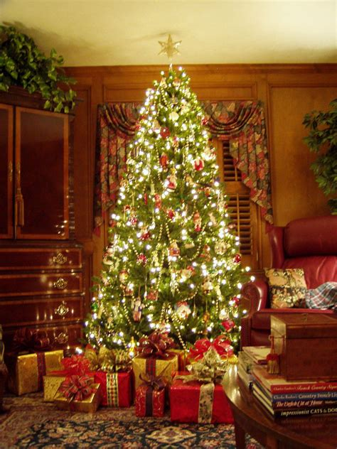 gorgeous christmas tree pictures photos and images for
