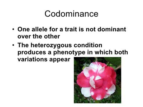 exle of codominance codominance 3rd2015 govanc