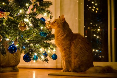 cat mesmerized by a tree peter liu