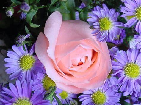 imagenes flores de otoño обои рабочего стола цветы цветы обои