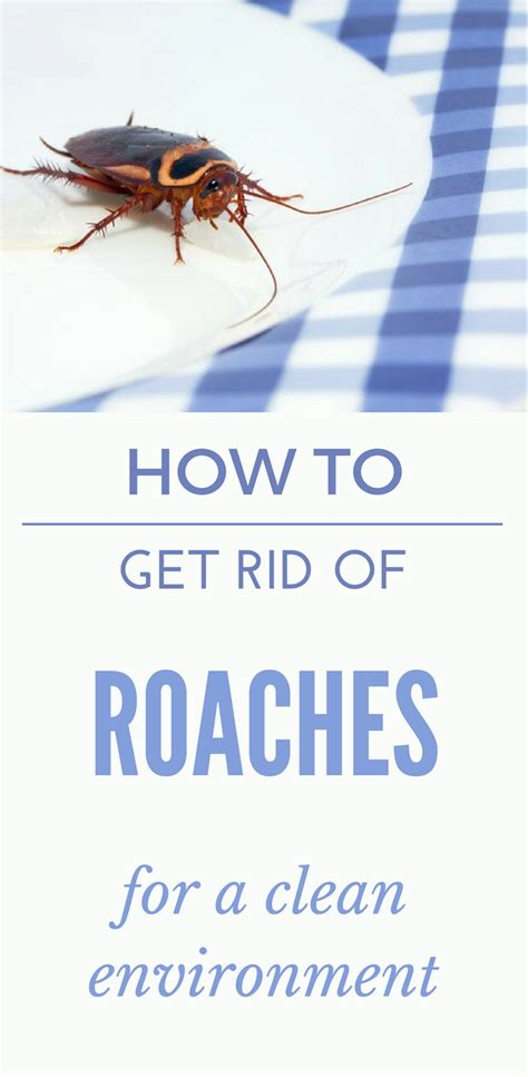 how to get rid of cockroaches in bathroom how to get rid of roaches in the bathroom how to get rid