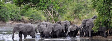 cote divoir transport d animaux vivants en c 244 te d ivoire ata