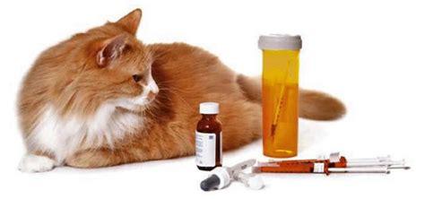 alimentazione per prevenire il diabete alimentazione per prevenire il diabete nel gatto