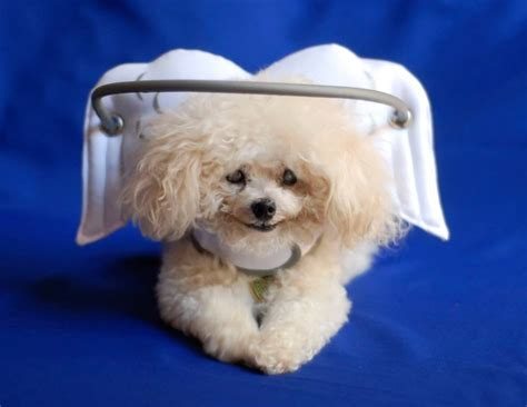 halo for blind dogs halo headgear keeps muffin and other blind dogs safe from bumps