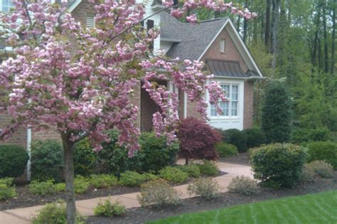 trees aeration seeding lawn maintenance landscape