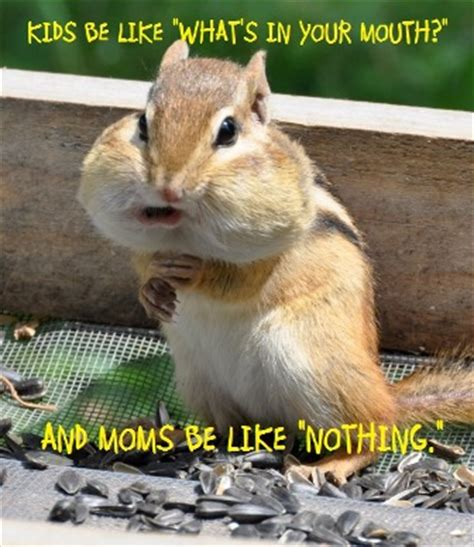 Chipmunk Meme - lol my baby girl asked this all the time funny