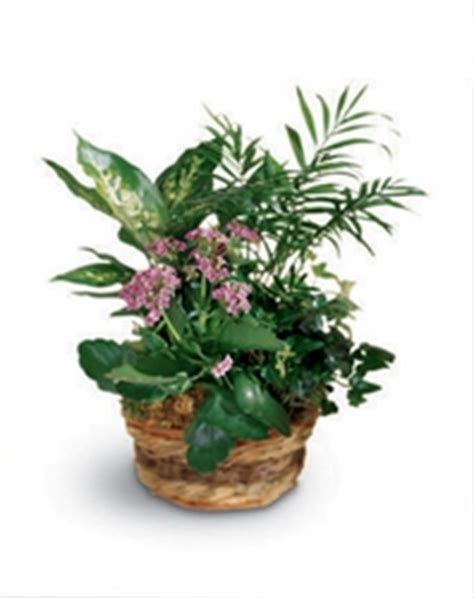 Emerald Garden Basket by Cremer Florist Your Florist In Hanover Pennsylvania Pa