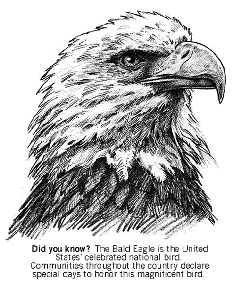 Bald Eagle Crayola Com Au Bald Eagle Coloring Page