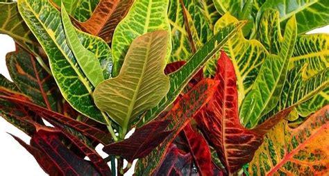 piante decorative da interno piante verdi da appartamento piante appartamento come