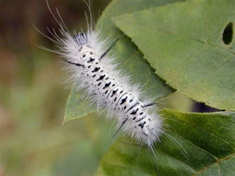 Caterpillar Cat Nh Brown one s maine september 2012