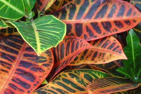 pianta appartamento piante d appartamento piante da interno quali sono le