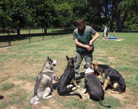 dog trainer   career
