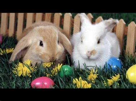 ostergruesse froehliche ostern frohe ostern youtube