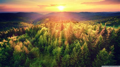 woods sunset wallpaper van hellspit playerunknown s battlegrounds forums