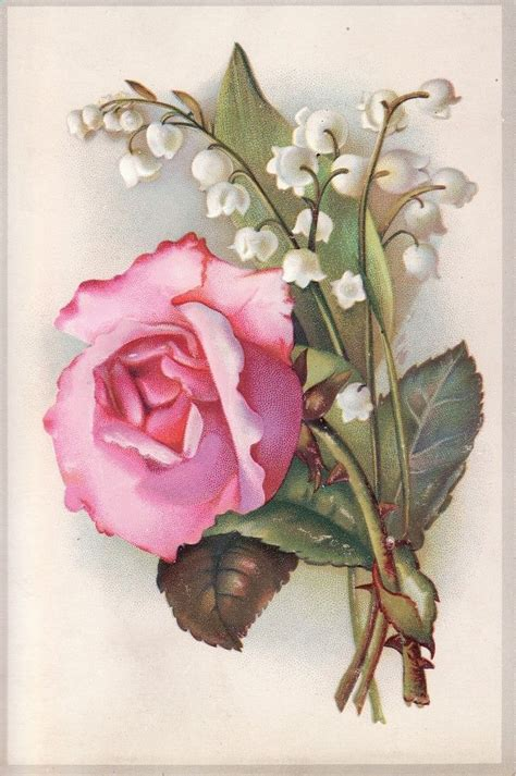 lily rose tattoo antique scrap diecut picture card pink