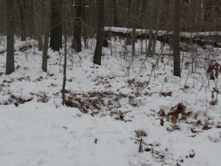7 Ways To In The Snow by 7 Ways To Sort Out Deer Trails Havalon Knives