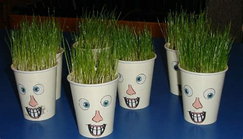 Grow Cup gardening idea grow grass in cups draw faces on cups
