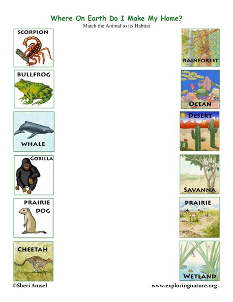 Animal Habitats Worksheets by Match The Animals To Their Habitats Exploring